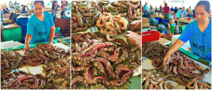 PRAWNS Collage