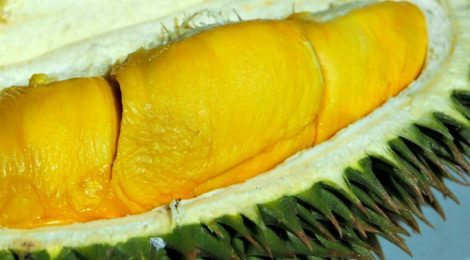 DURIAN KING@TTDI: DURIANS WITH A CAUSE on SUNDAY, 14 August 2016