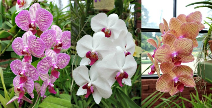 orchids-1-collage