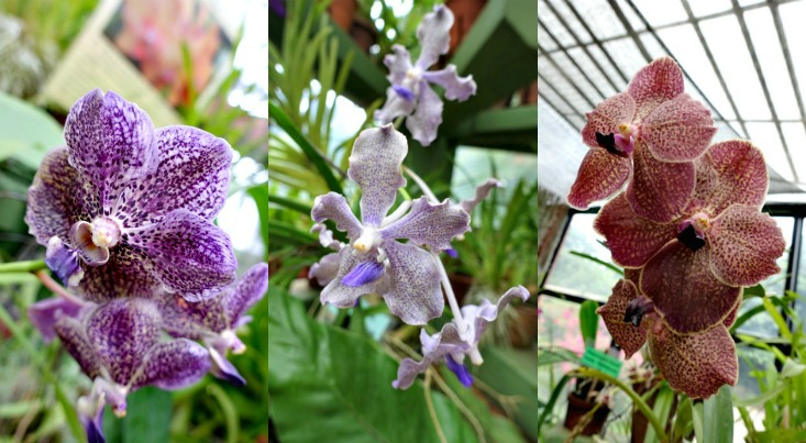 orchids-collage